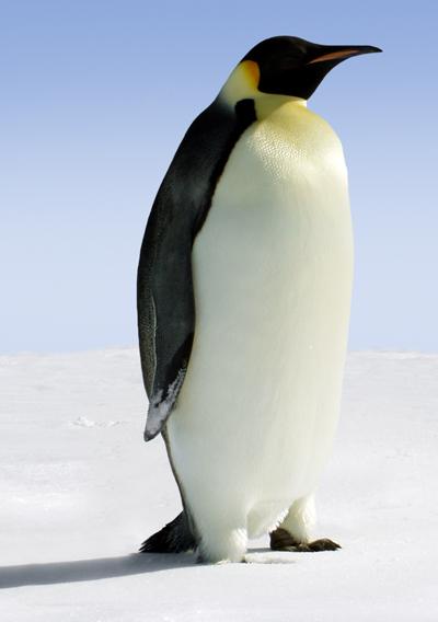 Schon wieder ein Pinguin in der Wüste